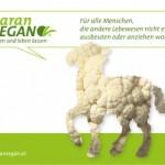 PR Bild Maran Vegan, Werbesujet Schaf